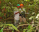 Community members working in the So Luis do Remanso forest.