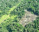 Forest and devastated area, in the WWF-Brazil Expedition to the National Park of Juruena, Apuí, Amazonas, Brazil