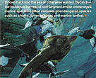 Coral Triangle Bycatch Brochure Cover 