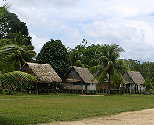 Thatched houses with forest backdrop