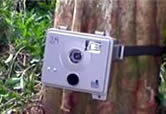 Camera trap. / ©: WWF-Canon