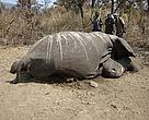 Armed groups are believed to have killed the elephants for their tusks.