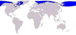 Beluga whale range / &copy;: Wikipedia