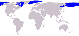 Bowhead whale range / &copy;: Wikipedia