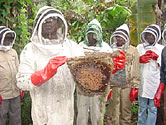 Set for action: More honey more money! / ©: WWF-Canon / WWF-CARPO / Peter Ngea
