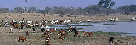National Park &amp;quot;Protected&amp;quot; wetland in Chad Basin National Park. rel=