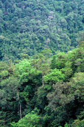 The Chocó Biogeographic rainforest is considered one of the richest places in biodiversity. / ©: WWF-Canon / Diego M. GARCES