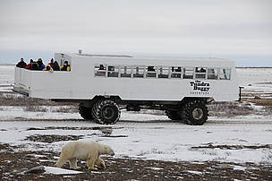 This photo shows how close the scientists were able to get to the polar bears while working on the Tundra Buggy project near Churchill, Manitoba on the Hudson Bay in Canada.