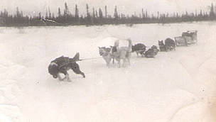 Steven Attla's dog team in Huslia, Alaska in the winter of 1948. / ©: Steve Attla