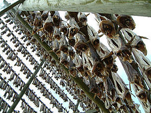 Cod drying. Lofoten Islands, Norway. / &copy;: Nigel Allan