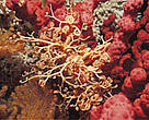 Cold-water coral is a haven for many commercial fish species.