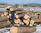 Illegally harvested timber confiscated by the &lt;I&gt;Sobol&lt;/I&gt; antipoaching brigade.