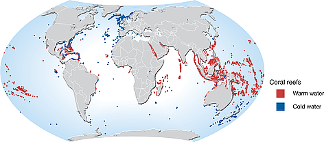 Map showing distribution of coldwater and tropical coral reefs. rel=