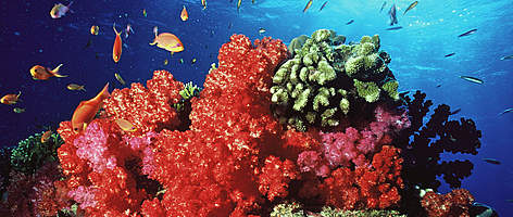 Coral reef, Fiji. rel=