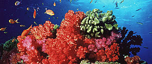 Coral reef, Fiji. / &copy;: WWF-Canon / Cat HOLLOWAY