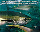CTNI tuna factsheet cover
