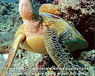 CTNI turtle factsheet cover