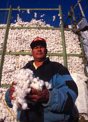 Harvested cotton from the irrigated lands of the Chihuahua Desert near Chihuahua City, Chihuahua, ... / &copy;: WWF-Canon / Edward PARKER