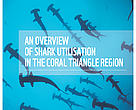 Cover of sharks report (Coral Triangle)