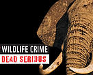 Illicit wildlife crime is no longer a simple environmental problem, it is a transnational crime