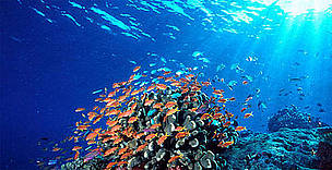 Coral Reefs in the Coral Triangle  / &copy;: WWF Canon 