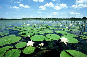 多瑙河流域。圖片來自:WWF。