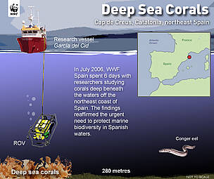 Diagram of the WWF-Spain Deep Coral Project. / &copy;: Nigel Allan / WWF