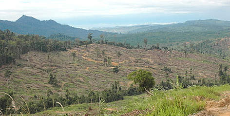 Cut down forest landscape in Sabah, North Borneo, Malaysia. rel=