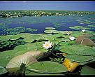 The Danube Delta is one of the most valuable natural areas on earth, including the world's largest reed beds and a globally important resting and breeding place for birds.