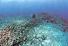 Destroyed coral reef as result of dynamite fishing, the Philippines. / ©: WWF-Canon / Jürgen FREUND