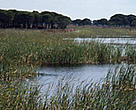 Marshlands are an important part of the Doana National Park ecosystem. Andalusia, Spain.