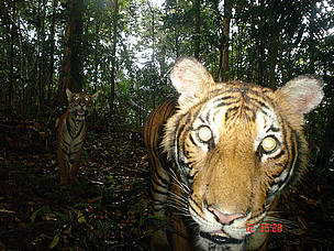 Camera trap
