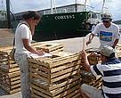 Equipo WWF inspeccionando trampas mejoradas para langosta. Estas trampas tienen una abertura por donde pueden escapar langostas juveniles (menores a la talla mínima de pesca).