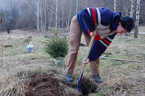 Volunteers plant Christmas trees in pots in Vitosha Nature Park, Bulgaria, 11 April 2009 / ©: WWF/Konstantin Ivanov