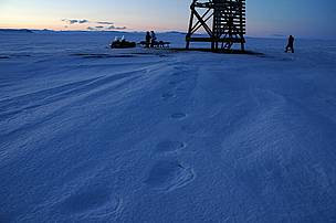 Polar bear tracks. Chukotka, Russia.