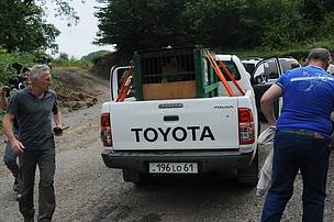 Bear on the way to release area in Syunik province
