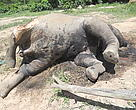 "Since the poachers arrived no elephants have been seen at the Bai, which was described as an ""elephant mortuary"""
