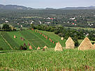 Maramures landscape, with traditional haystacks. / &copy;: WWF / Pop Emil