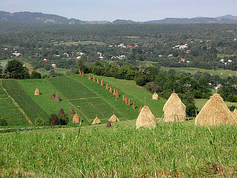 Maramures landscape, with traditional haystacks. rel=