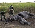 The WWF said local sources there had by Thursday counted 26 elephant carcasses, four of which were calves