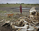 The elephant population in Tanzania's Selous Game Reserve dropped from 40,000 to 13,000 over the last three years.