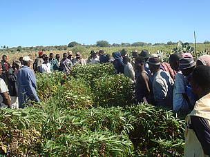Emile Jean demonstrating agroecology to other farmers. 