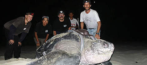 Carlos Drews - far right - and the Panamanian team tag one of the first leatherbacks for the 2005 ... rel=
