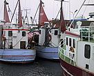 Fishing boats in port