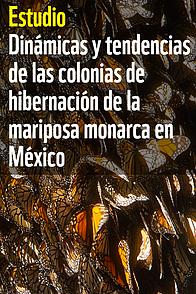 Dinámicas y tendencias de las colonias de hibernación de la mariposa monarca en México / ©: WWF