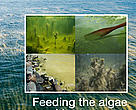Report - Feeding the algae with tax money: EUTRO-farming and EU-trophication