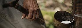 / ©: WWF - Canon / Dado Galdieri
