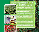 Palm oil, soy and tropical forests: a strategy for life!