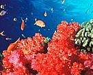 Fiji is famous throughout the world for spectacularly rich and vibrant soft coral reefs, but many are under pressure from tourism.