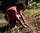 A Nakanacagi Villager plants a tree sponsored by ASCO Motors One Tyre One Good Deed Campaign
